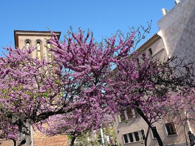 Els habitants de Cornellà milloren la nota a la gestió municipal i el 89% mostra la seva satisfacció de viure a la ciutat