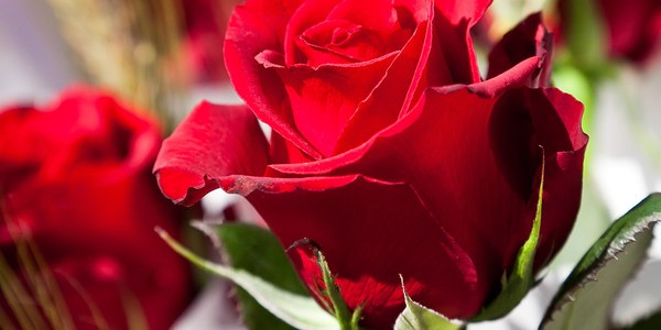 Sant Jordi, llibres, roses i mesures de prevenció
