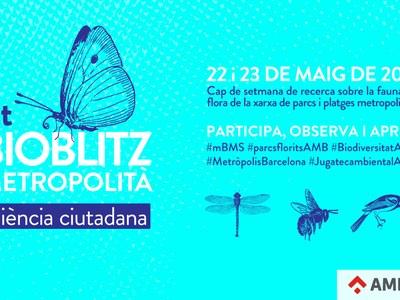 Conèixer la biodiversitat dels parcs al Bioblitz Metropolità